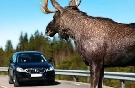 Moose_Test_Car_Test